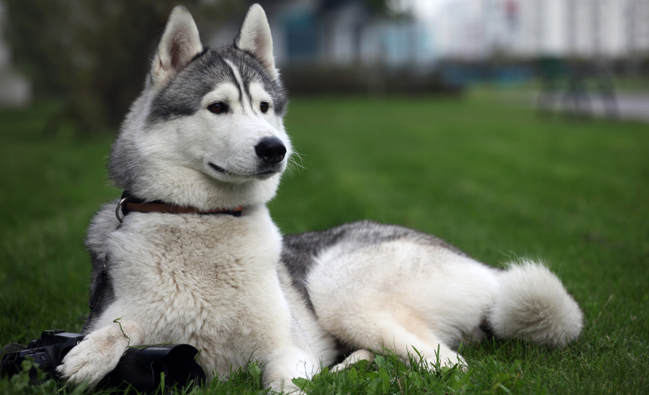 Determine The Best Dog Breed For You